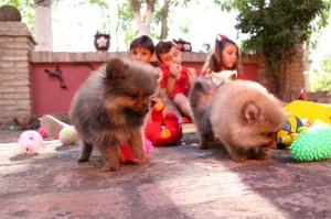 Pomeranias de Cantibrera
