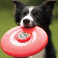http://www.criaderocantillana.com/wp-content/uploads/2012/07/dog-frisbee1.jpg