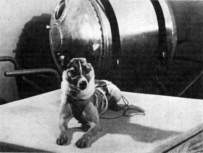 Perros famosos (II). Laika