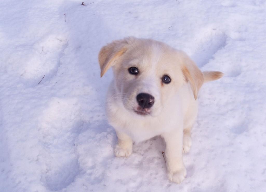 Cachorro en la nieve. // Foto: www.animalesmascotas.com.