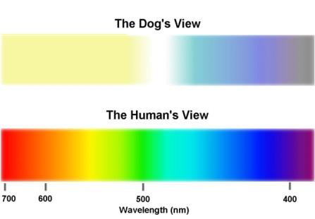 La vista de los perros